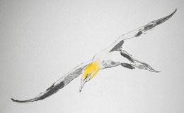 Sea Bird (Sketch)