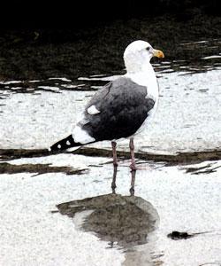 Solana Beach Resident