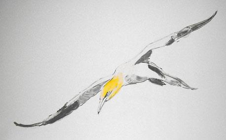 Seabird (Sketch)