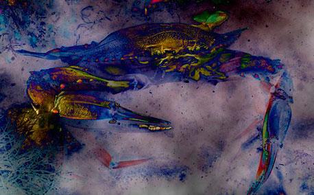 Blue Crab 2014