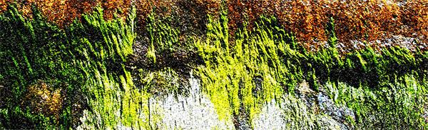 Beach Cave Moss